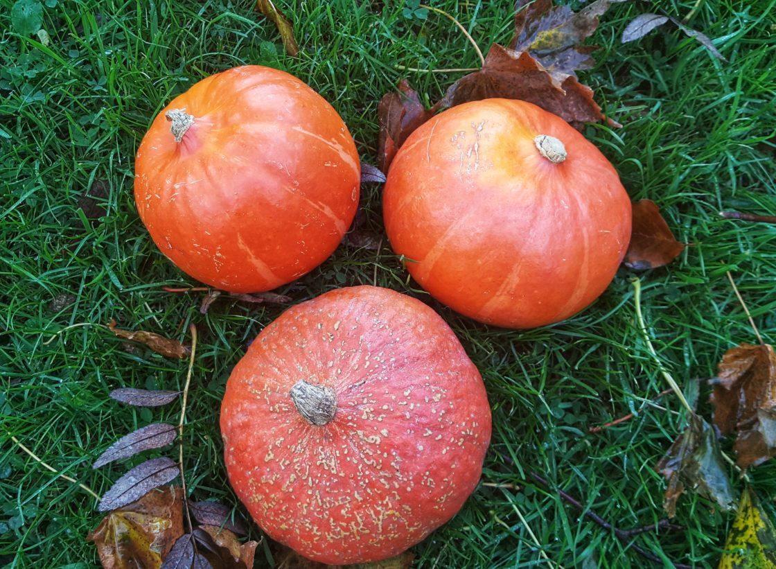 Eat The Season Pumpkin; Delalicious